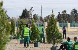 برخورد قاطع با شهروندی که یک درخت را قطع کرد + عکس