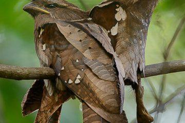 پرنده ای زیبا و شگفت انگیز+ عکس