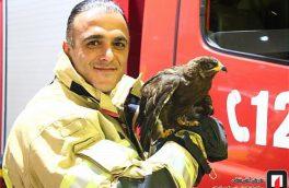 نجات پرنده شکاری کمیاب در خانه ای در تهران/ تصویر