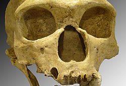 کشف بقایای تاریخی یک انسان مقابل تاریخ برای اولین بار در ایران/ تصویر