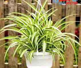 این گیاه را حتما در خانه نگهداری کنید
