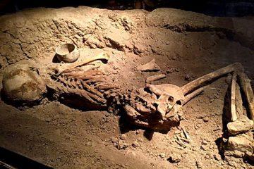 کشف اسکلت ۵۰ هزار ساله در کرج